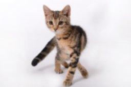 kitten-694918_1920.jpg